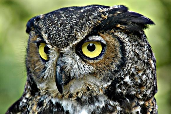 owl-07